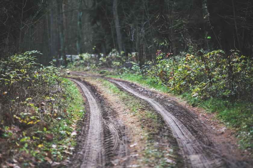 wood-road-dirty-forest.jpg
